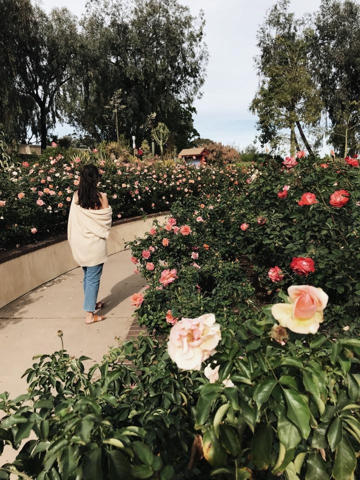 Balboa Park Botanical Garden San Diego California Flowers