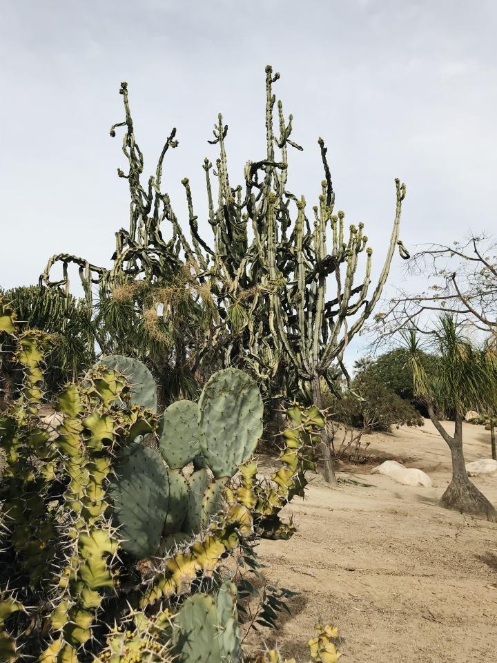 Cactus Sand Balboa Park San Diego California